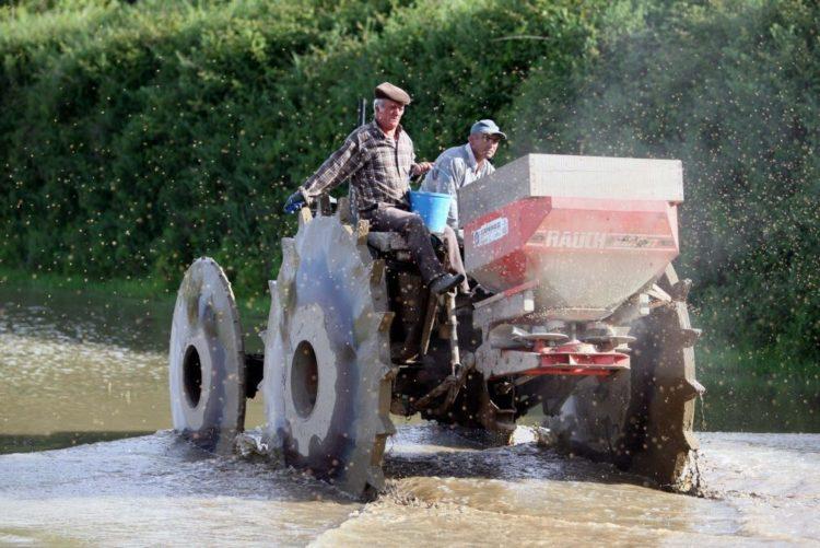 Resultado de imagem para Seca vai provocar quebra de 50% na produção de arroz no vale do Sado