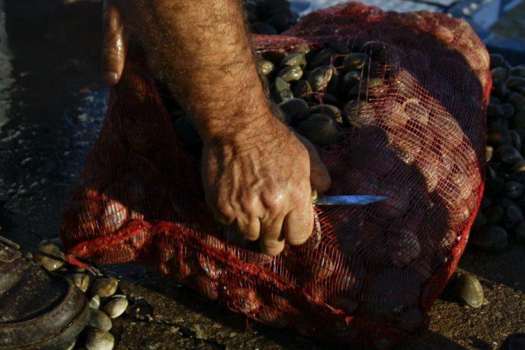 Resultado de imagem para Aveiro: Polícia Marítima apreendeu 12 quilos de amêijoa-japónica contaminados
