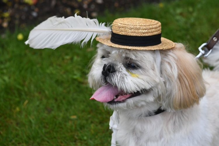 Resultado de imagem para Primeiro festival para cães em Portugal arranca sábado em Gaia