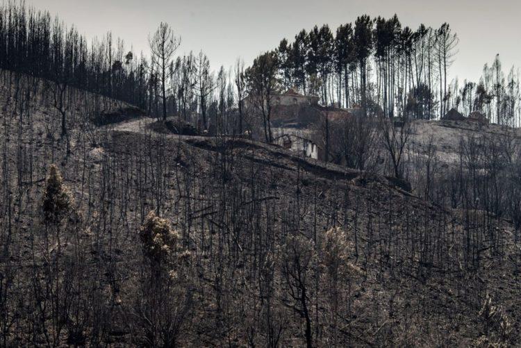 Resultado de imagem para Governo avança com sistema de cotação para travar preço da madeira queimada