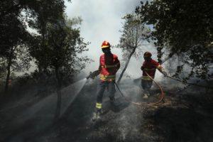 Mais de 3 mil ovelhas mortas em Oliveira do Hospital devido ao fogo