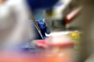 Covid-19: Cientistas trabalham em 20 vacinas e 30 potenciais medicamentos