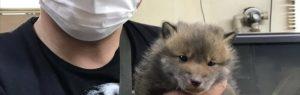 Japonês resgata cachorro mas depressa percebe que afinal o cão não era um cão