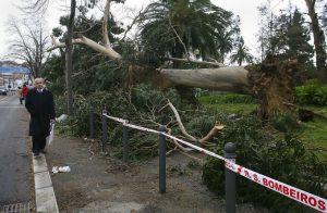 Vento fez derrubar árvores e só em Viseu houve mais de 60 ocorrências