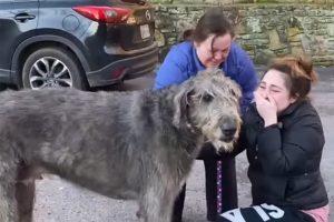 Reencontro emocionante de cão desaparecido em acidente comove no Facebook [vídeo]