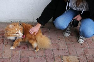 Parlamento açoriano aprova fim imediato de abate de animais de companhia