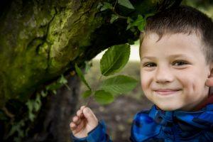 Árvore Europeia do Ano tem o Plátano de Portalegre entre as finalistas [saiba como votar]