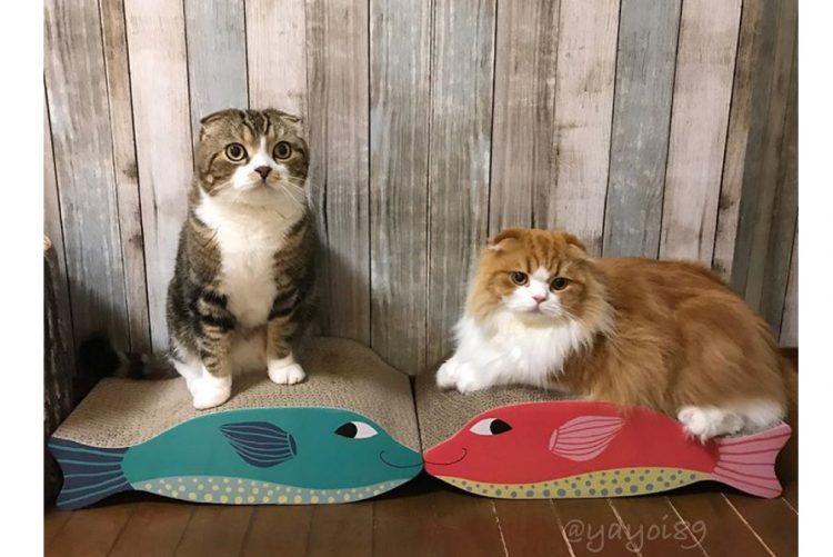 Arranhador para gatos em forma de peixe, da Flying Tiger