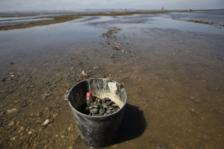 GNR apreende mais de três toneladas de pescado em Alcochete e Peniche