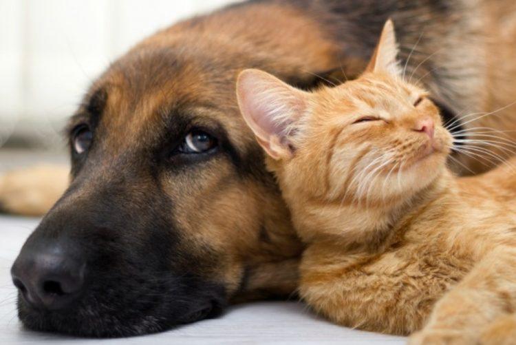 Casais vão poder partilhar a guarda dos animais de estimação