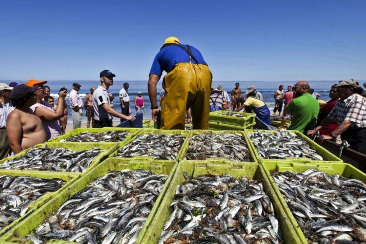 Mais de 38 toneladas de pescado apreendidas doadas a instituições de solidariedade - GNR