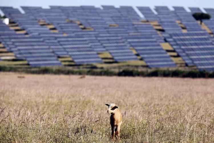 Estremoz vai ter quatro centrais solares fotovoltaicas, num investimento de 20ME