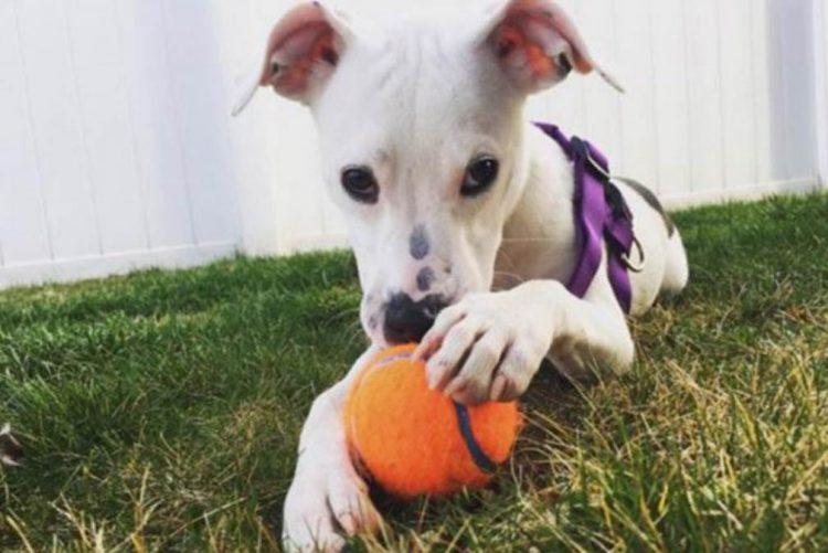Pai mata cães da filha para a castigar por não ter arrumado a casa