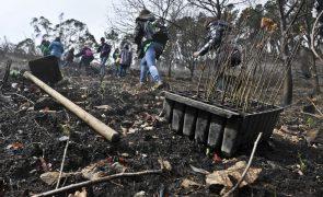 Governo define áreas prioritárias para fiscalizar limpeza das florestas