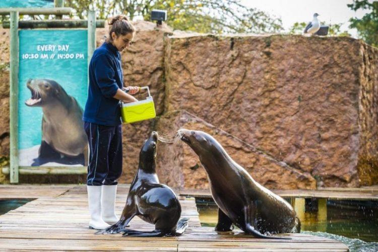 Jardim Zoológico com visitas guiadas este sábado… grátis!