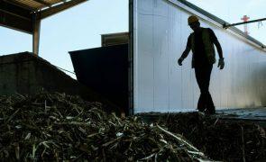 Associação de produtores de biomassa diz que há mais resíduos no mercado