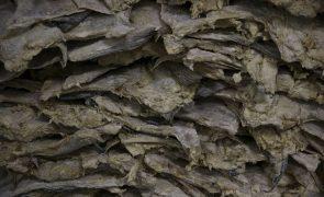 ASAE apreende quase 14 toneladas de bacalhau em Ílhavo
