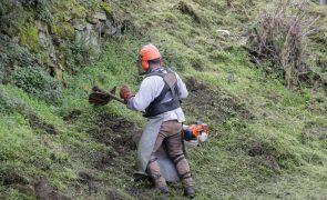 Prazo para limpar terrenos acaba hoje e há coimas para incumpridores