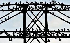 Aves envelhecem mais rápido na cidade do que no campo