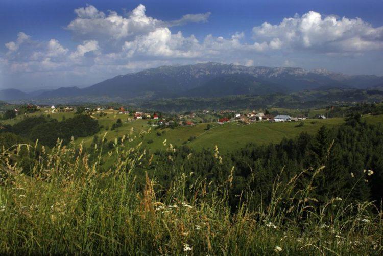 Alterações climáticas aceleram aumento da variedade de plantas nos cumes de montanhas