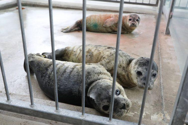 Angola entra na exportação de focas vivas e prevê vender 150 animais em 2018