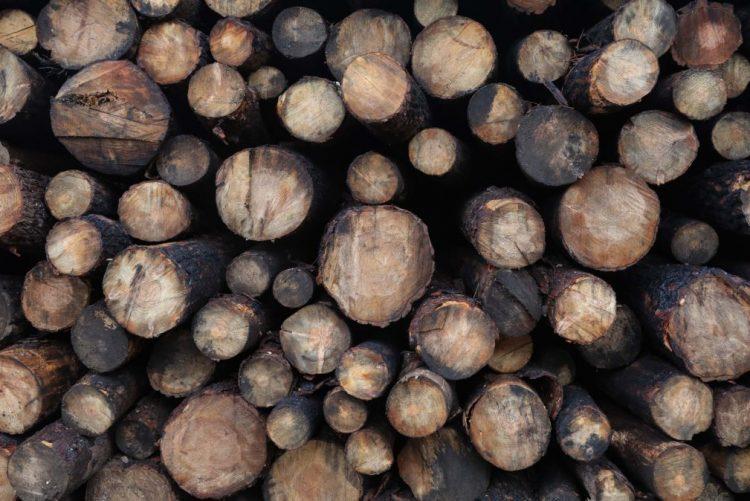 Novas regras para o setor madeireiro em Moçambique são uma surpresa - ativista