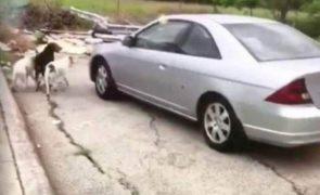 Mulher filmada a abandonar cães em local isolado [vídeo]