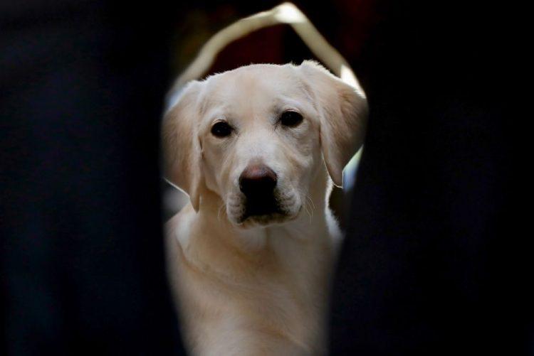 Associação do Porto forma cães de assistência para doar a deficientes