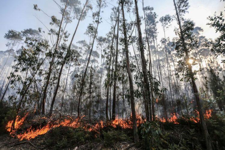 ALERTA | Quatro concelhos do distrito de Faro em risco muito elevado de incêndio
