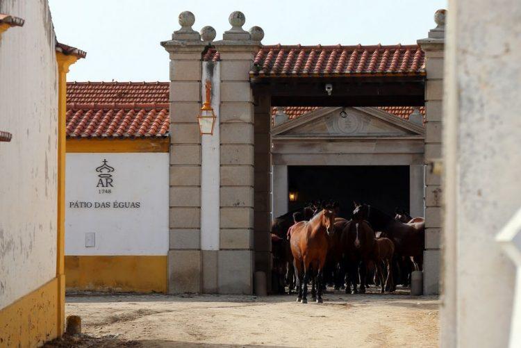 Vila Galé levanta caderno de encargos para concessão da Coudelaria de Alter do Chão