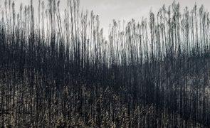 Incêndios: Comissão do Parlamento Europeu aprova ajuda de 50,6 ME a Portugal