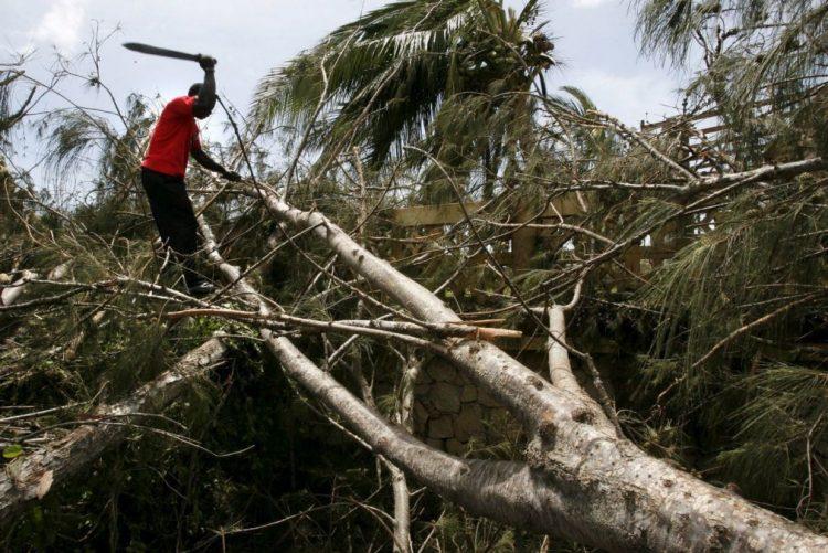 Receitas estatais com exploração de madeira disparam em Moçambique - Governo