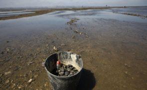 Polícia Marítima apreende mais de duas toneladas de amêijoa-japónica em Santarém
