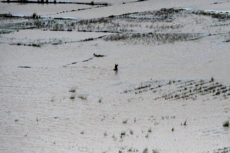 Moçambique precisa de 8,7 ME para fazer face à época das chuvas