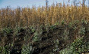Reflorestação após incêndio de Pedrógão Grande avança devagar