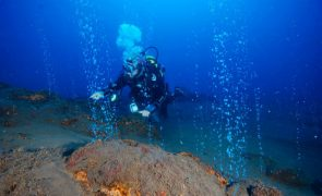 Descoberto oásis no fundo do mar dos Açores