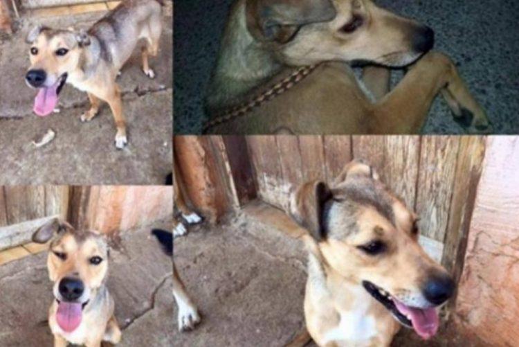 Cão atira-se de varanda depois de passar várias horas ao sol e sem água [vídeo]