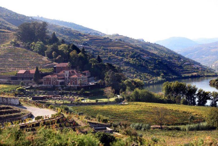 Mudanças climáticas afetarão produção de vinho no Douro