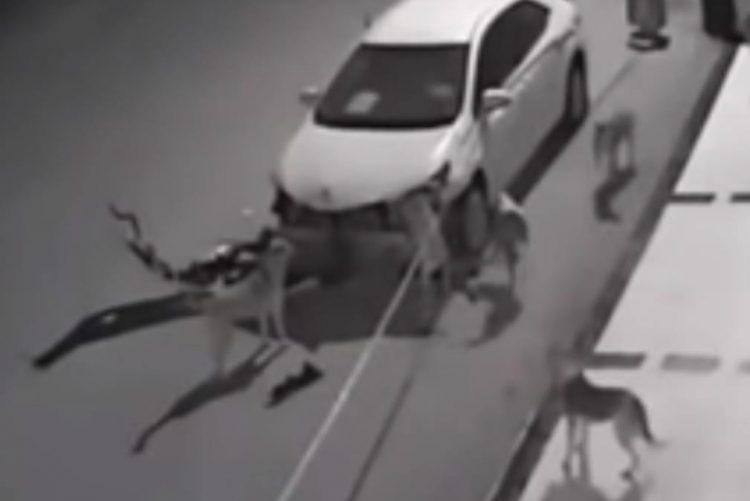 Agrediu cão e matilha juntou-se para lhe destruir o carro [vídeo]