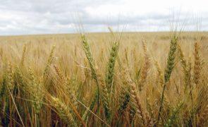 Governo aprova estratégia nacional para promoção da produção cerealífera
