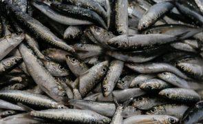 Pesca da sardinha deverá ser proibida em 2019