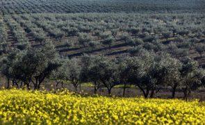 Máximos históricos na produção de pomares e olival marcam campanha agrícola 2016/17