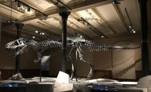 Nova espécie de dinossauro carnívoro descoberta em Torres Vedras