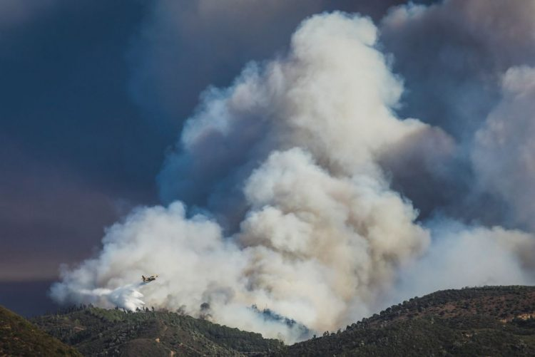 Algarve com dois pontos de apoio aos animais afetados pelos incêndios
