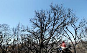 Da silvicultura às caminhadas, em Monchique fazem-se contas ao futuro