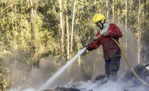 Viana do Castelo: Jovem apanhado a atear fogo numa floresta
