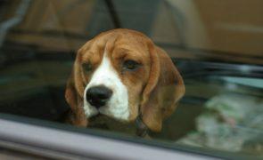 Homem parte vidro de carro para salvar dois cães e é multado