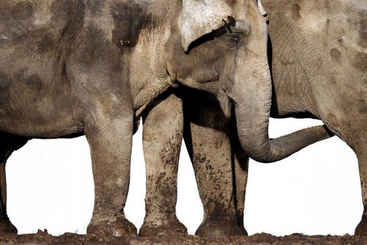 Turista tenta tirar foto a elefante e é pisada mortalmente
