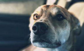 Cão ataca o próprio dono e salva mulher de violência doméstica