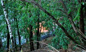 Floresta diversificada resiste melhor a fogos e secas - estudo